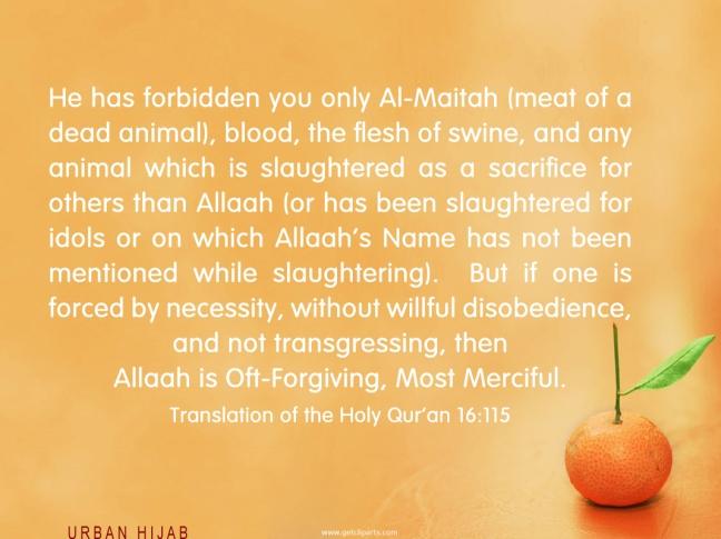 Quran 16:115