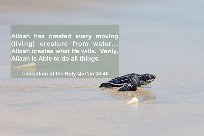 Translation of the Holy Qur'an 24:45